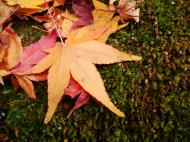 Asisbiz Kinkaku ji Temple Zen Garden Maples Kyoto Japan Nov 2009 20