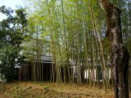 Asisbiz Kinkaku ji Temple Zen Garden bamboo Kyoto Japan Nov 2009 01