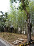 Asisbiz Kinkaku ji Temple Zen Garden bamboo Kyoto Japan Nov 2009 02