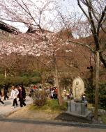 Asisbiz Kiyomizu dera Aterui and More hi monument cherry blossom season 2010 01