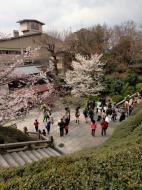 Asisbiz Kiyomizu dera entrance facing back towards Kyoto during cherry blossom season 01