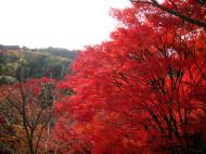 Asisbiz Maple trees Autumn leaves Kiyomizu dera Kyoto Japan Nov 2009 030