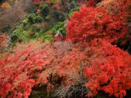 Asisbiz Maple trees Autumn leaves Kiyomizu dera Kyoto Japan Nov 2009 031