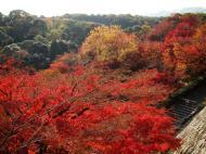 Asisbiz Maple trees Autumn leaves Kiyomizu dera Kyoto Japan Nov 2009 034