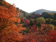 Asisbiz Maple trees Autumn leaves Kiyomizu dera Kyoto Japan Nov 2009 035