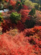 Asisbiz Maple trees Autumn leaves Kiyomizu dera Kyoto Japan Nov 2009 039