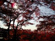 Asisbiz Maple trees Autumn leaves Kiyomizu dera Kyoto Japan Nov 2009 044