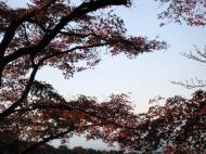 Asisbiz Maple trees Autumn leaves Kiyomizu dera Kyoto Japan Nov 2009 045