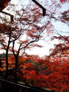 Asisbiz Maple trees Autumn leaves Kiyomizu dera Kyoto Japan Nov 2009 046