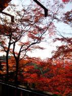 Asisbiz Maple trees Autumn leaves Kiyomizu dera Kyoto Japan Nov 2009 046