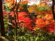 Asisbiz Maple trees Autumn leaves Kiyomizu dera Kyoto Japan Nov 2009 051