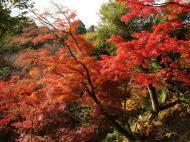 Asisbiz Maple trees Autumn leaves Kiyomizu dera Kyoto Japan Nov 2009 055
