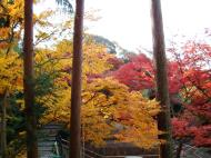 Asisbiz Maple trees Autumn leaves Kiyomizu dera Kyoto Japan Nov 2009 057