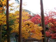 Asisbiz Maple trees Autumn leaves Kiyomizu dera Kyoto Japan Nov 2009 057