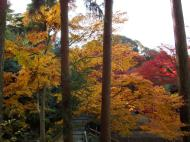 Asisbiz Maple trees Autumn leaves Kiyomizu dera Kyoto Japan Nov 2009 058
