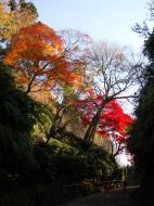 Asisbiz Maple trees Autumn leaves Kiyomizu dera Kyoto Japan Nov 2009 059