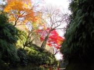 Asisbiz Maple trees Autumn leaves Kiyomizu dera Kyoto Japan Nov 2009 060