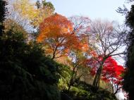 Asisbiz Maple trees Autumn leaves Kiyomizu dera Kyoto Japan Nov 2009 061