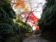 Asisbiz Maple trees Autumn leaves Kiyomizu dera Kyoto Japan Nov 2009 062