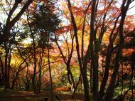 Asisbiz Maple trees Autumn leaves Kiyomizu dera Kyoto Japan Nov 2009 077