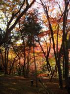 Asisbiz Maple trees Autumn leaves Kiyomizu dera Kyoto Japan Nov 2009 080