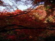 Asisbiz Maple trees Autumn leaves Kiyomizu dera Kyoto Japan Nov 2009 081