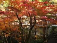 Asisbiz Maple trees Autumn leaves Kiyomizu dera Kyoto Japan Nov 2009 082
