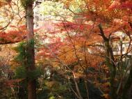 Asisbiz Maple trees Autumn leaves Kiyomizu dera Kyoto Japan Nov 2009 083