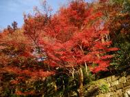 Asisbiz Maple trees Autumn leaves Kiyomizu dera Kyoto Japan Nov 2009 084