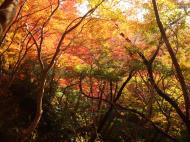 Asisbiz Maple trees Autumn leaves Kiyomizu dera Kyoto Japan Nov 2009 089