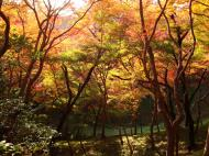 Asisbiz Maple trees Autumn leaves Kiyomizu dera Kyoto Japan Nov 2009 090