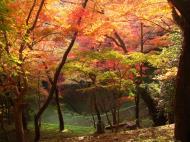 Asisbiz Maple trees Autumn leaves Kiyomizu dera Kyoto Japan Nov 2009 096