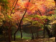 Asisbiz Maple trees Autumn leaves Kiyomizu dera Kyoto Japan Nov 2009 098
