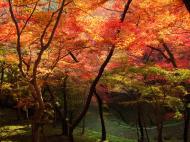 Asisbiz Maple trees Autumn leaves Kiyomizu dera Kyoto Japan Nov 2009 100