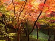Asisbiz Maple trees Autumn leaves Kiyomizu dera Kyoto Japan Nov 2009 101