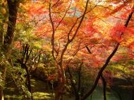 Asisbiz Maple trees Autumn leaves Kiyomizu dera Kyoto Japan Nov 2009 103