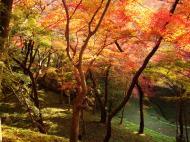 Asisbiz Maple trees Autumn leaves Kiyomizu dera Kyoto Japan Nov 2009 104