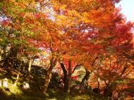 Asisbiz Maple trees Autumn leaves Kiyomizu dera Kyoto Japan Nov 2009 105