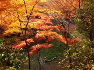 Asisbiz Maple trees Autumn leaves Kiyomizu dera Kyoto Japan Nov 2009 106