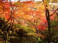 Asisbiz Maple trees Autumn leaves Kiyomizu dera Kyoto Japan Nov 2009 108