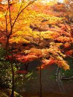 Asisbiz Maple trees Autumn leaves Kiyomizu dera Kyoto Japan Nov 2009 110