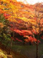 Asisbiz Maple trees Autumn leaves Kiyomizu dera Kyoto Japan Nov 2009 111