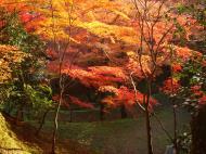Asisbiz Maple trees Autumn leaves Kiyomizu dera Kyoto Japan Nov 2009 112