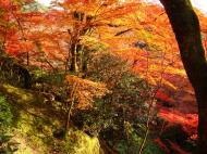 Asisbiz Maple trees Autumn leaves Kiyomizu dera Kyoto Japan Nov 2009 113
