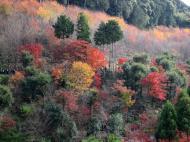 Asisbiz Maple trees Autumn leaves Kiyomizu dera Kyoto Japan Nov 2009 117