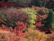 Asisbiz Maple trees Autumn leaves Kiyomizu dera Kyoto Japan Nov 2009 119