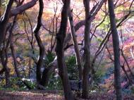 Asisbiz Maple trees Autumn leaves Kiyomizu dera Kyoto Japan Nov 2009 125