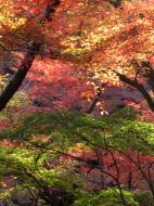 Asisbiz Maple trees Autumn leaves Kiyomizu dera Kyoto Japan Nov 2009 131