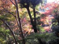 Asisbiz Maple trees Autumn leaves Kiyomizu dera Kyoto Japan Nov 2009 137