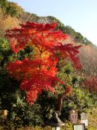 Asisbiz Maple trees Autumn leaves Kiyomizu dera Kyoto Japan Nov 2009 138